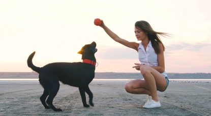 Reiseziele-Hund